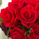 葉子からバラの花束